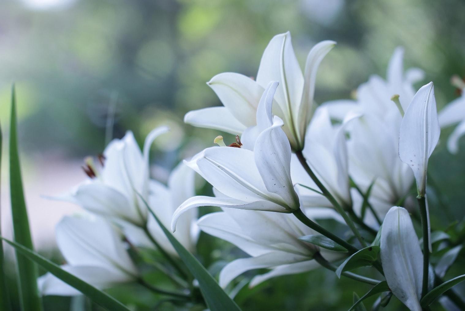 Kwiaty dla lipcowej Panny Młodej