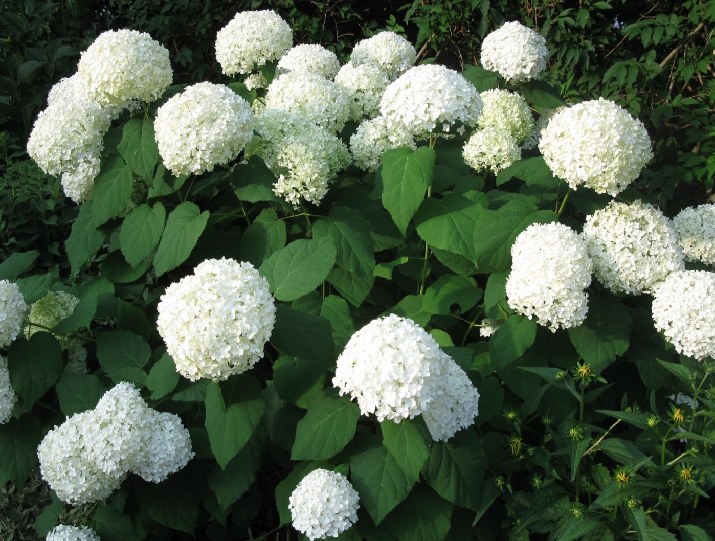 Kwiaty dla sierpniowej Panny Młodej